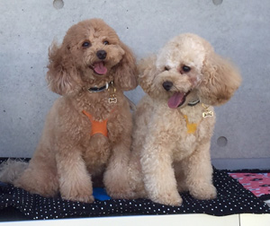 月ちゃん&明ちゃん BuddyBelts(バディーベルト) ドーン&サンシャイン